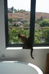 House cats to join the Big Wide World….eek!