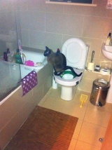 Toilet training for cats. Yesreally