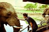My spirit animal is anelephant…